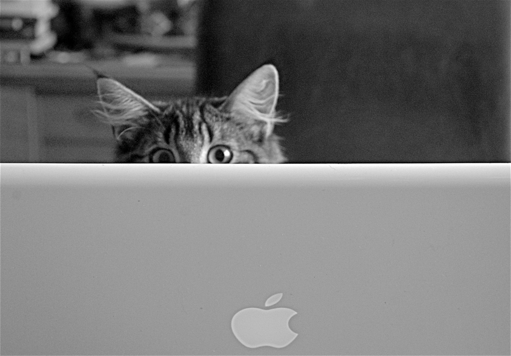 On the internet nobody knows you're a cat.